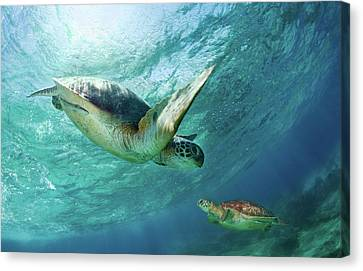 Swim Canvas Print - Contact by Andrey Narchuk