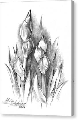 Conte Pencil Sketch Of Two Irises Canvas Print