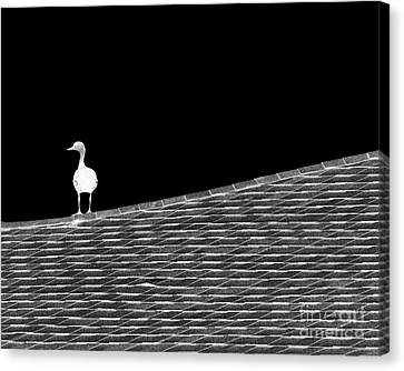 Contemplating Canvas Print by Darla Wood