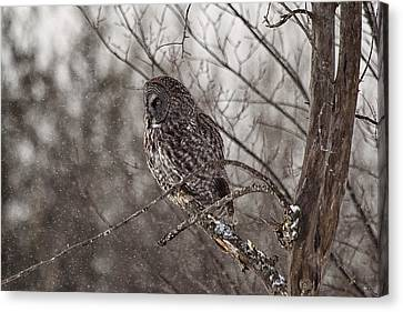Contemplating Winter Canvas Print