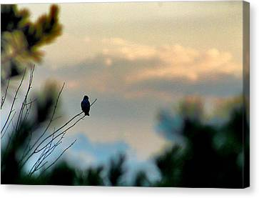 Contemplation Canvas Print by Bruce Patrick Smith
