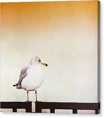 Contemplation Canvas Print by Carolyn Cochrane