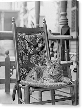Contented Cat Canvas Print