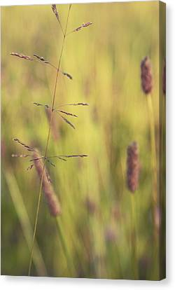 Contrario - Gr02a Canvas Print by Variance Collections