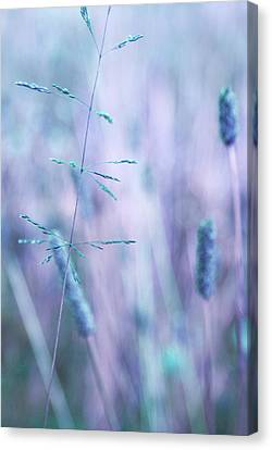 Contrario - S11c Canvas Print by Variance Collections