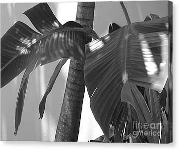 Contrasting Palms Canvas Print by Margaret Juul Ammann