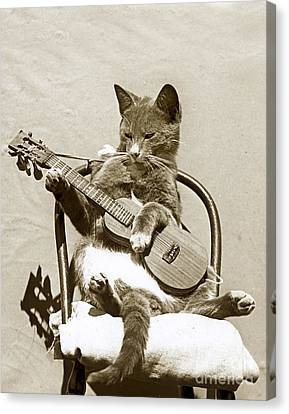 Canvas Print featuring the photograph Cool Cat Playing A Guitar Circa 1900 Historical Photo By Photo  Henry King Nourse by California Views Mr Pat Hathaway Archives