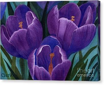 Cool Purple Crocus Canvas Print by Vikki Wicks