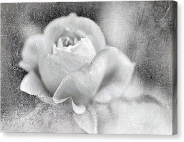 Canvas Print featuring the photograph Cool Rose by Annie Snel