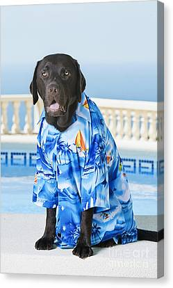 Cool Summer Dog Canvas Print by Justin Paget