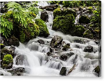 Cool Waters Canvas Print by Suzanne Luft