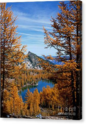 Cooney Lake And Martin Peak Canvas Print by Tracy Knauer