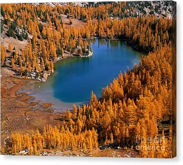 Cooney Lake Surrounded By Larch Trees Canvas Print by Tracy Knauer