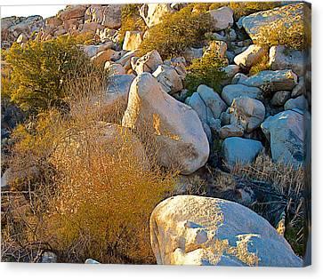 Cooper's Goldenbush In The Rocks Near Barker Dam In Joshua Tree Np-ca Canvas Print by Ruth Hager