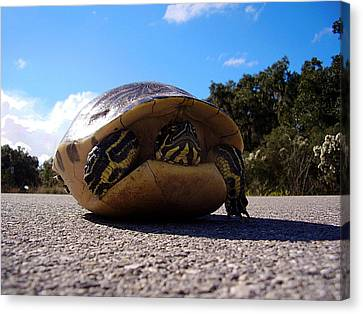 Cooter Turtle Canvas Print
