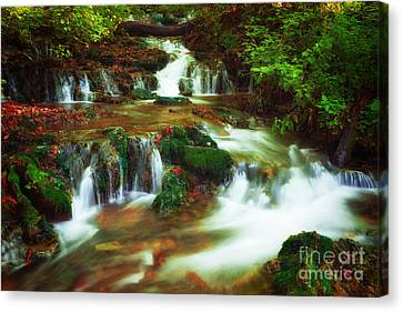 Copper And Moss Canvas Print by Wayne Stacy