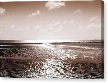 Copper Beach Canvas Print