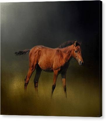 Copper Colt In The Moonlight Canvas Print by Jai Johnson