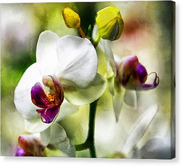 Flower Blooms Canvas Print - Coquette by Angelina Vick