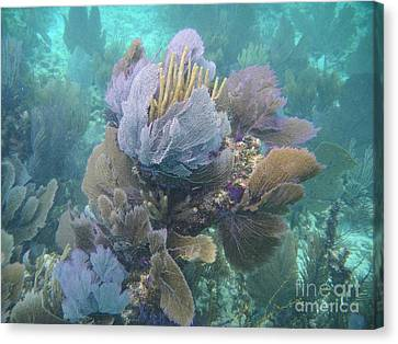 Pennekamp Canvas Print - Coral Cluster by Adam Jewell