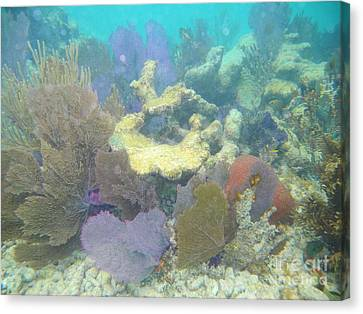 Pennekamp Canvas Print - Coral Garden by Adam Jewell
