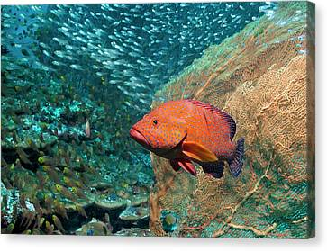 Coral Hind Over A Coral Reef Canvas Print by Georgette Douwma
