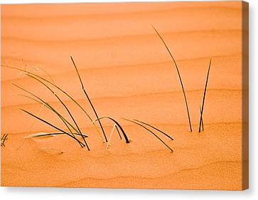 Coral Pink Sand Dunes Canvas Print - Coral Pink Sands 1 by Adam Romanowicz