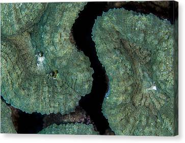 Coral Puzzle Canvas Print by Jean Noren