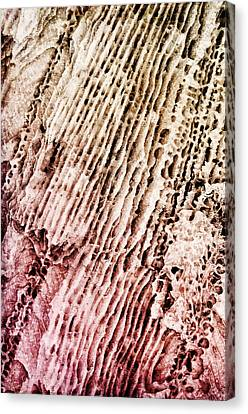 Coral Rock Close Up Canvas Print by Photography  By Sai