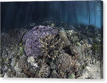 Corals Grow Along The Edge Canvas Print
