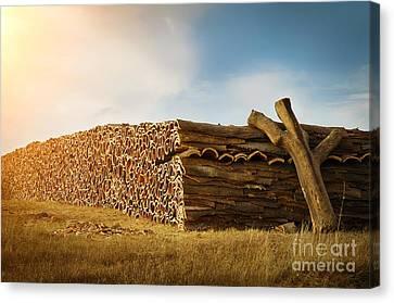 Cork Harvesting Canvas Print