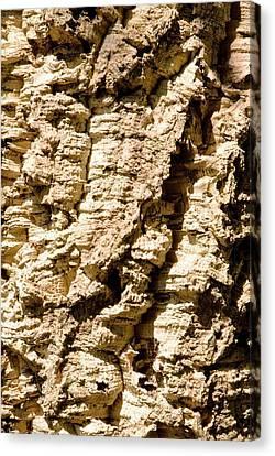Cork Oak Bark (quercus Suber) Canvas Print by Adrian Thomas