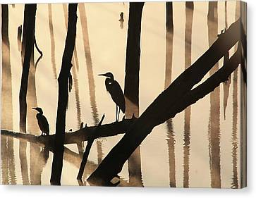 Cormorant And The Heron Canvas Print