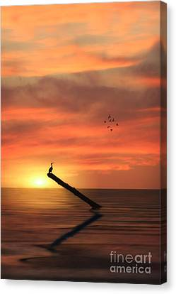 Cormorant In The Sunset Canvas Print by Tom York Images