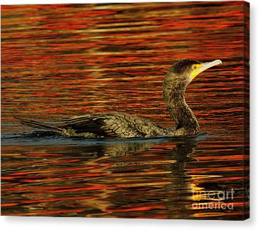 Cormorant On Autumn Red Canvas Print