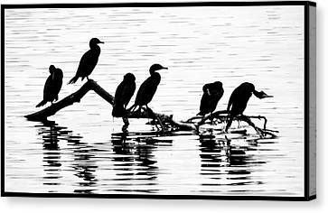 Canvas Print featuring the photograph Cormorant Silhouettes by Geraldine Alexander