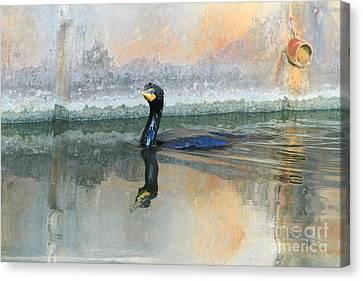 Cormorant Swim Canvas Print