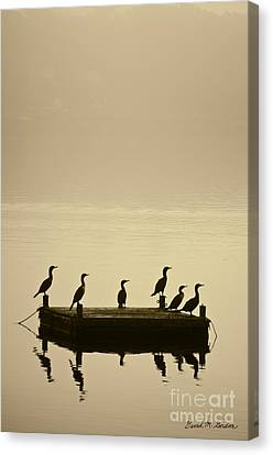 Cormorants And Dock Taunton River No. 2 Canvas Print by David Gordon