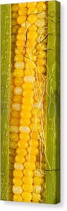 Corn Cob Silk Canvas Print