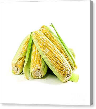 Corn Ears On White Background Canvas Print by Elena Elisseeva