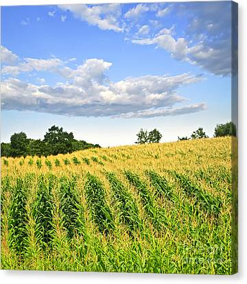Cornfield Canvas Print - Corn Field by Elena Elisseeva