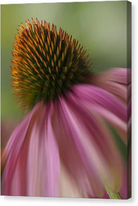 The Garden Corn Flower Canvas Print by Mike McGlothlen