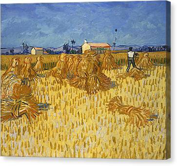 Corn Harvest In Provence Canvas Print