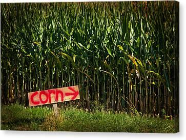 Corn Canvas Print by Karol Livote