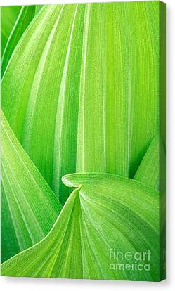 Canvas Print featuring the photograph Corn Lily Leaf Detail Yosemite Np California by Dave Welling
