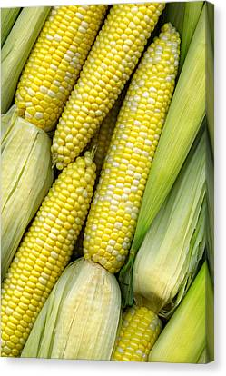 Corn On The Cob II Canvas Print by Tom Mc Nemar