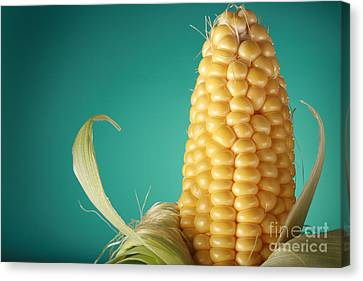 Corn On The Cob Canvas Print by Sharon Dominick
