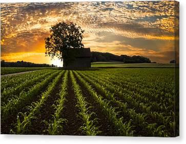 Tn Barn Canvas Print - Corn Rows by Debra and Dave Vanderlaan