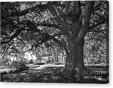 Cornell College Landscape Canvas Print by University Icons