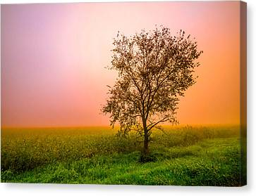 Cornfield Colors Canvas Print by Brian Stevens